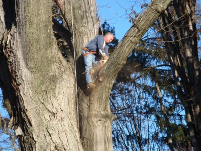 Tree Trimming And Tree Removal Services In Springfield Pa